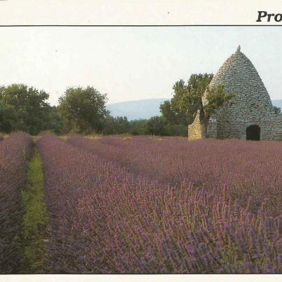 Provence, Fields of Lavender